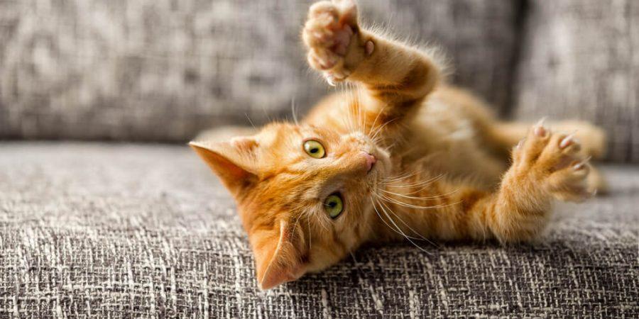 katt i soffa