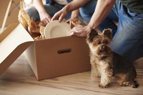 hund och flyttkartong