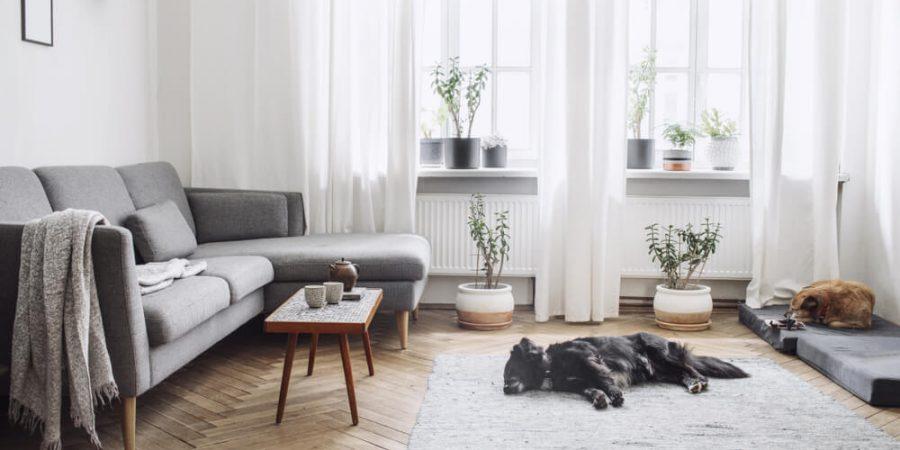 hund i nyrenoverat vardagsrum