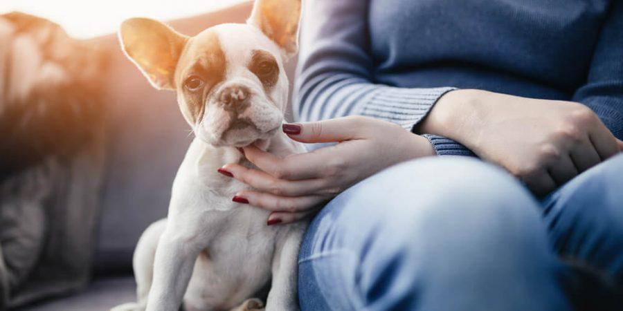 hund och matte i soffan