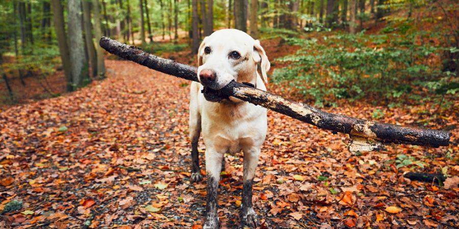 hund springer lös i skogen