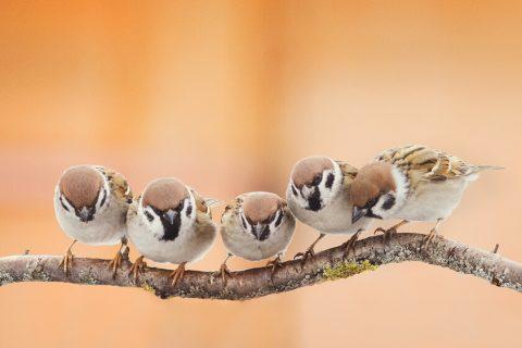 fåglar på rad på en gren