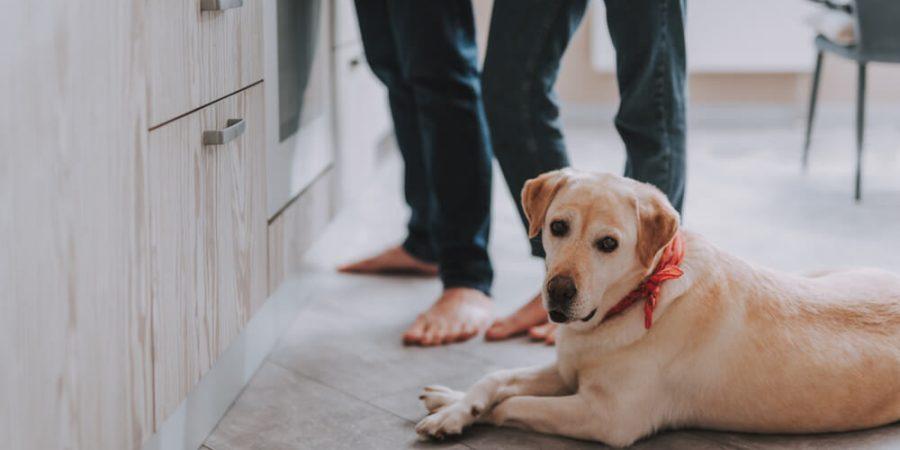 hund ligger på golvet i kök